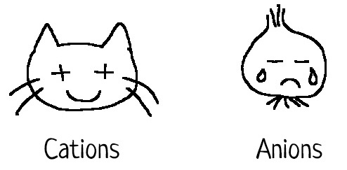 Cations et Anions